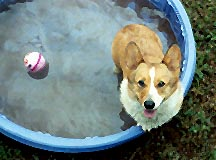 Pippin Cools Off.